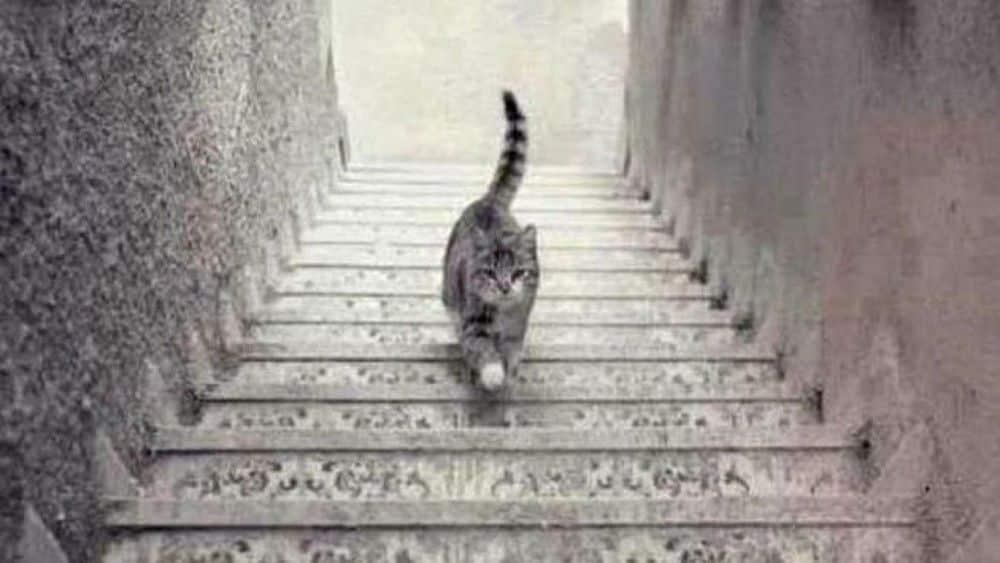 Gato sube o baja escaleras