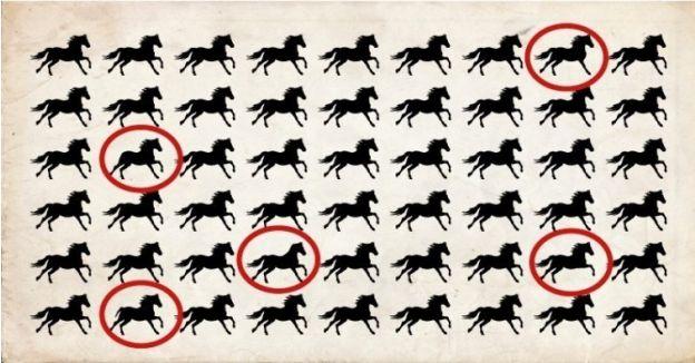 reto visual caballos respuesta