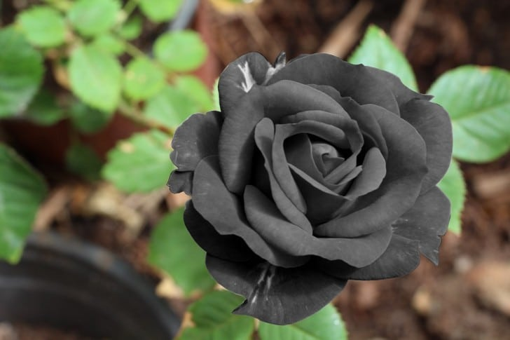Elige las flor que más te llame la atención